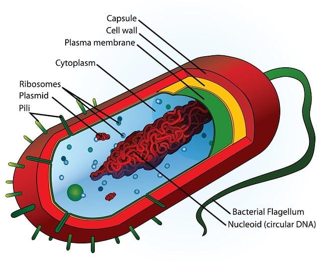 Tricomonaza vaginala