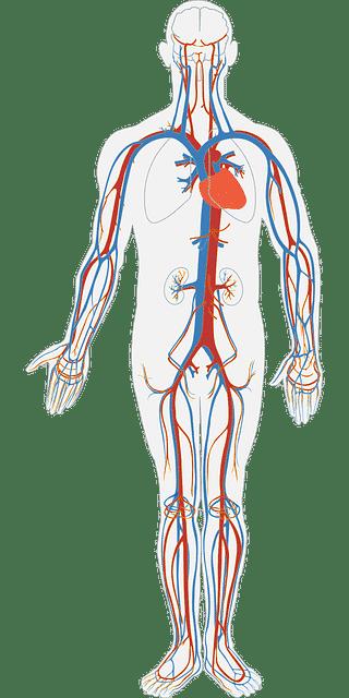 Anevrism (Boala anevrismala) arteriala