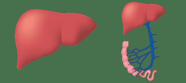 Hepatita A. Hepatita B