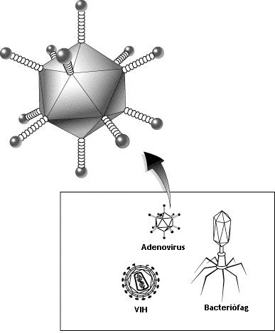 Adenoviroze.Diagnostic